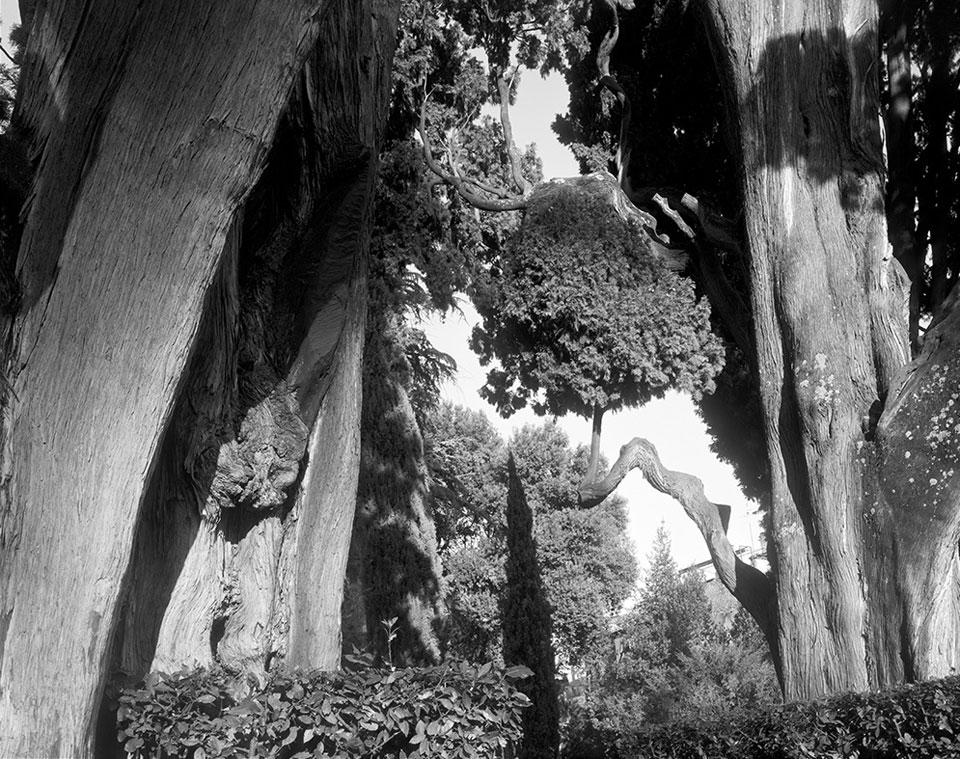 Treetops-web